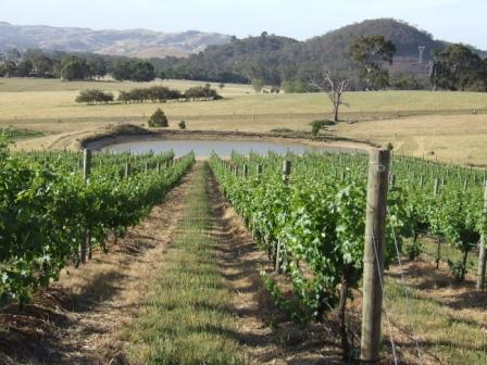 Two Hills Vineyard
