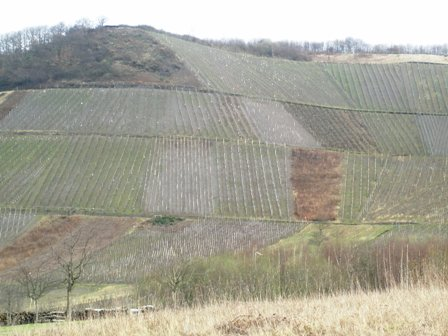 vineyardin-march.jpg