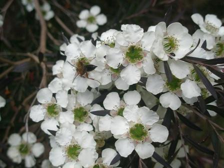 thv-flowers