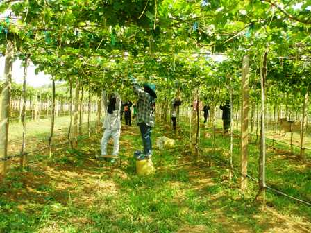 Vineyards Of Thailand Part 1 Holiday Park The Man From