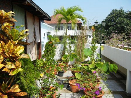 Good bye my terrace garden the man from mosel river for Terrace garden in india